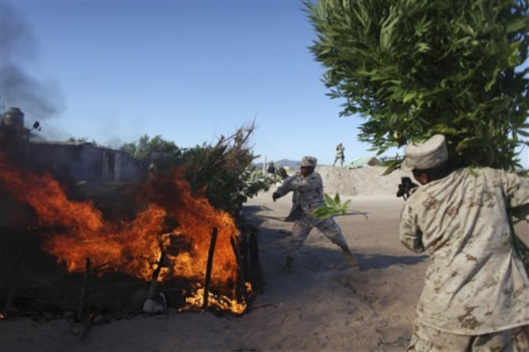 Soldiers burn marijuana plants at a plantation discovered near San Quintin, Baja California state, Mexico, on Friday. Officials say it's the largest marijuana plantation ever detected in Mexico.