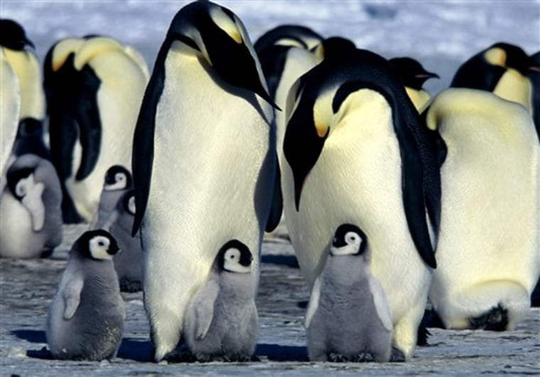 Penguin Protection