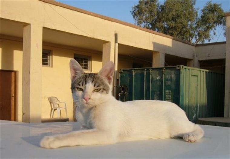 IRAQ CAT LADY OF BAGHDAD