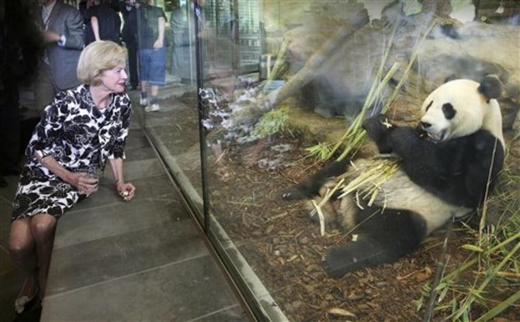 Australia Giant Pandas