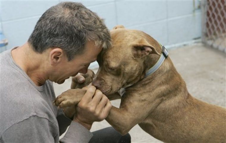 Dogfighting Rescue