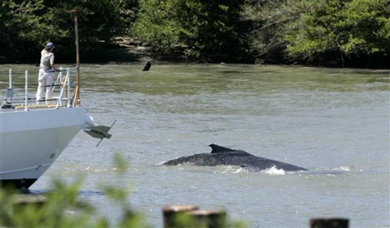Delta Whales