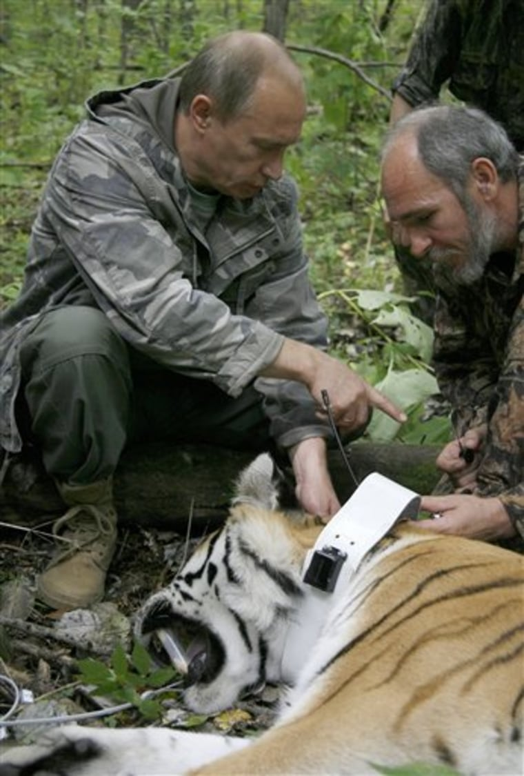 RUSSIA ENDANGERED TIGER