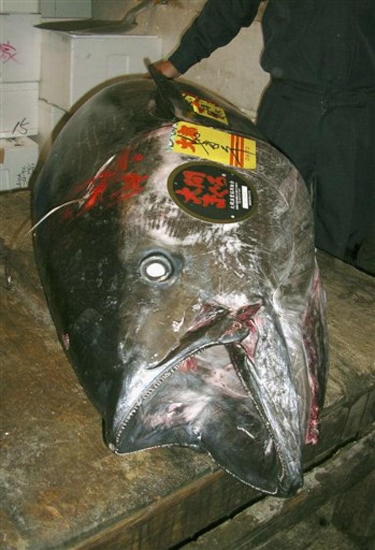 Japan Pricy Tuna