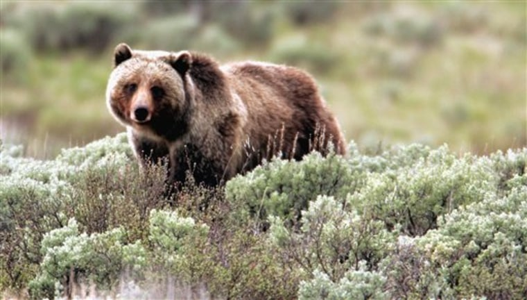 Grizzly Delisting