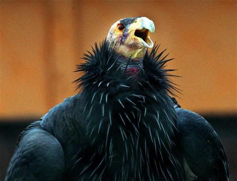 Return Of The Condor
