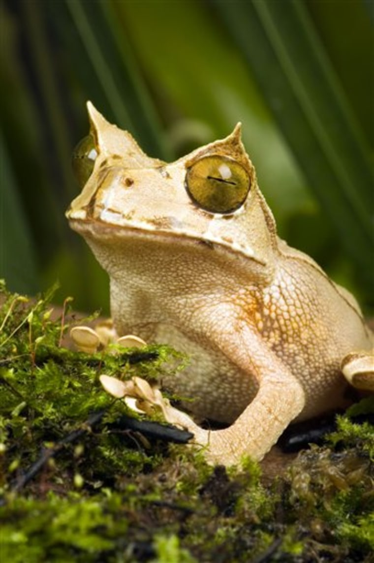 Saving Frogs