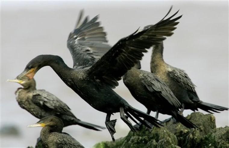 URUGUAY BIRD FLU