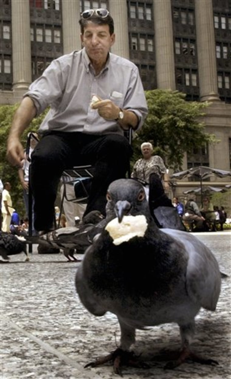 BIRD FLU PIGEONS