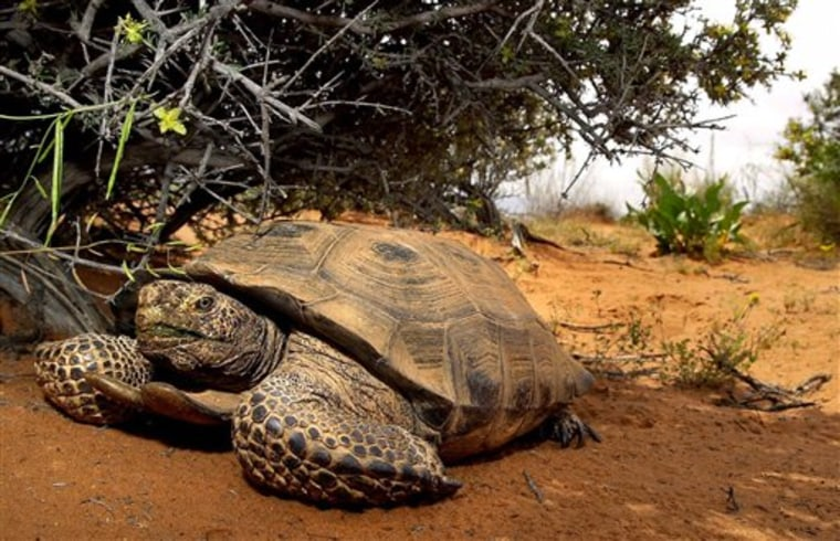 Tortoise Decline