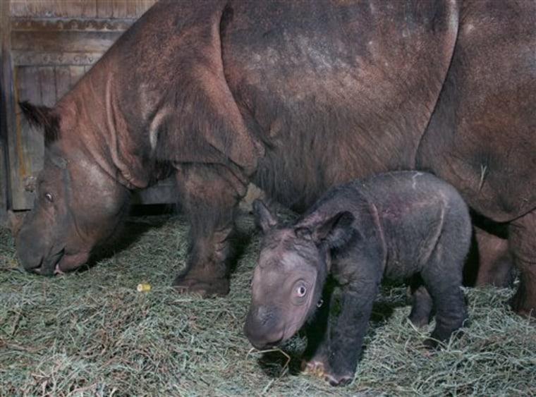 Rhino Poop