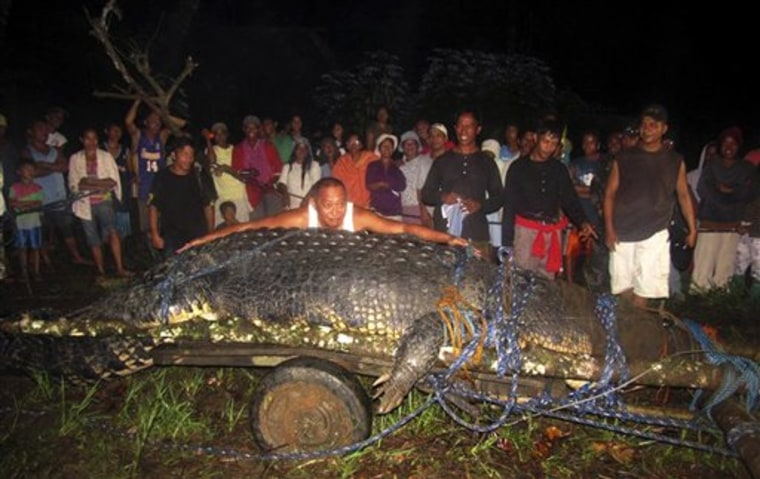 Mayor Edwin Cox Elorde of Bunawan township, Agusan del Sur Province, pretends on Sunday to measure a giant crocodile that was captured by residents after a three-week hunt.