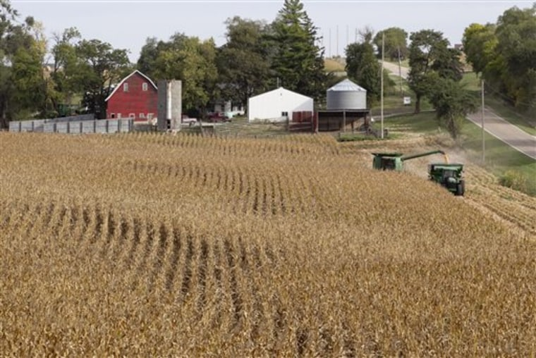 Corn is harvested at Duane Braesch's farm in Bennington, Neb., on Sept. 20.