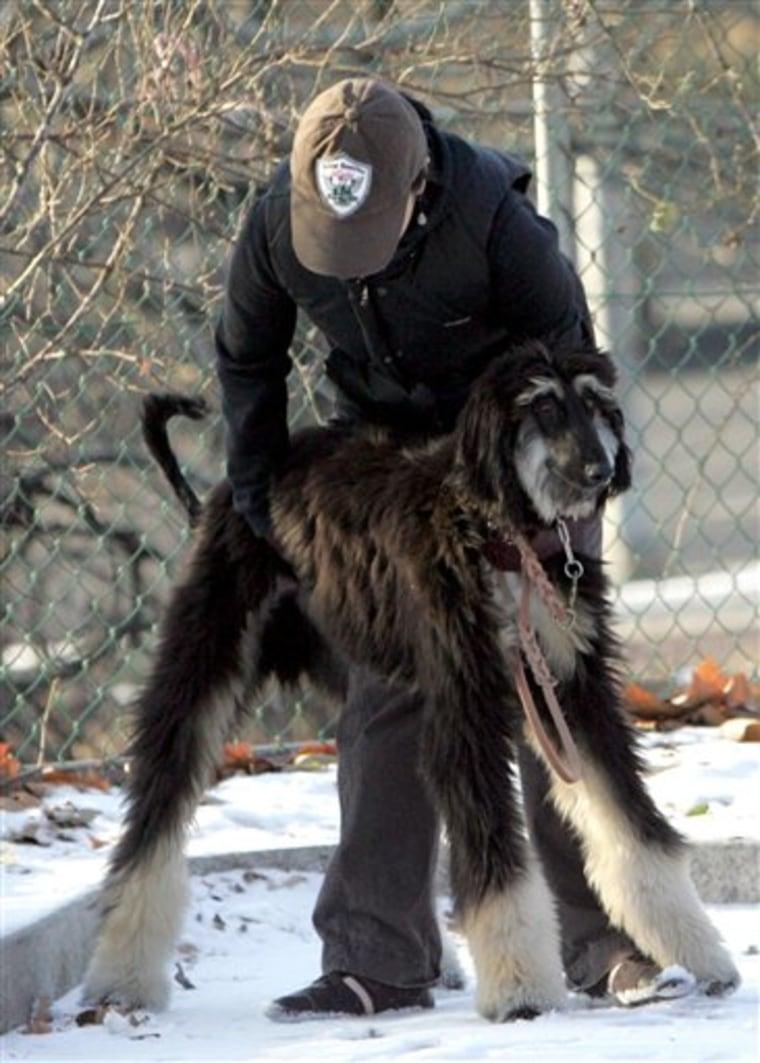 SOUTH KOREA STEM CELL DOG