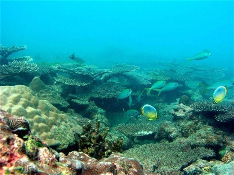 THAILAND NEW CORAL REEF