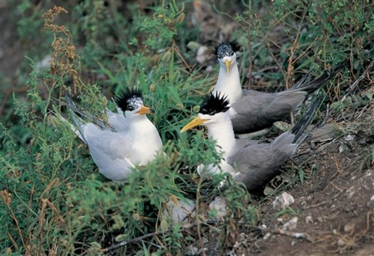 Taiwan Endangered Sea Bird