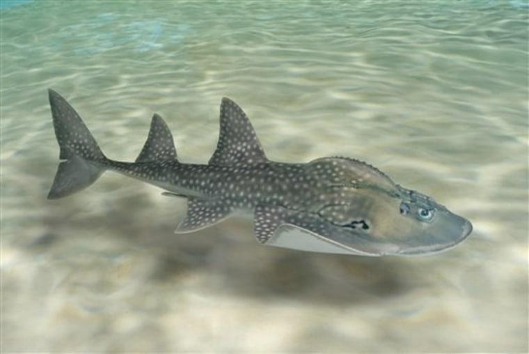 Shark Ray Love