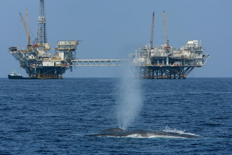 Endangered Blue Whales Spotted Off California Coast