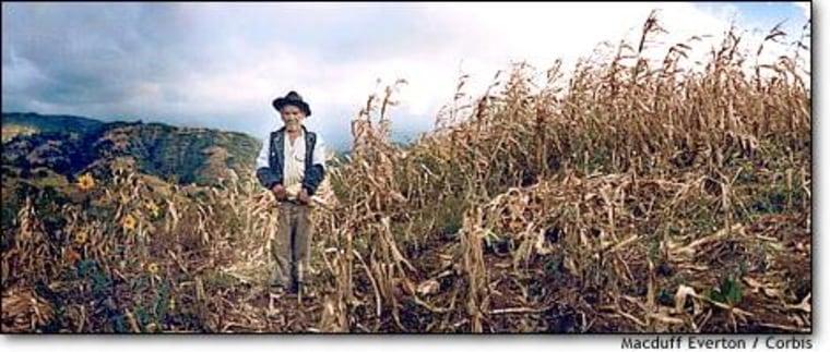 Oaxacan farmer in his corn field