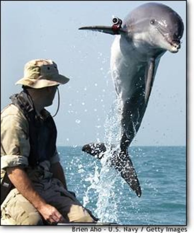 Sgt. Andrew Garrett watches K-Dog, a bottlenose dolphin attached to Commander Task Unit 55.4.3, leap out of the water while training near the USS Gunston Hall in the Persian Gulf.