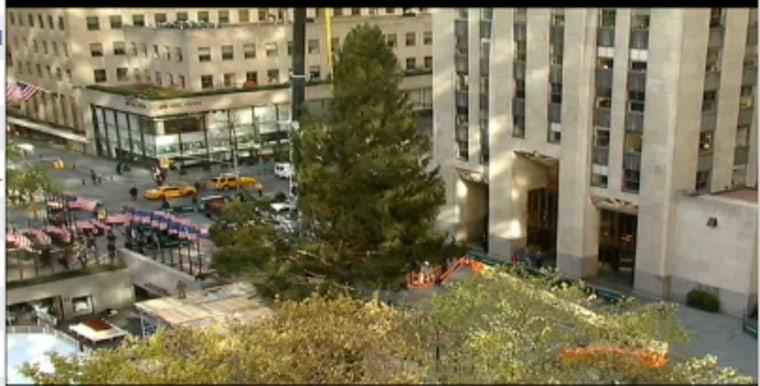 2012 tree arrives on Rockefeller Plaza (Photo courtesy of NBC NewsChannel)