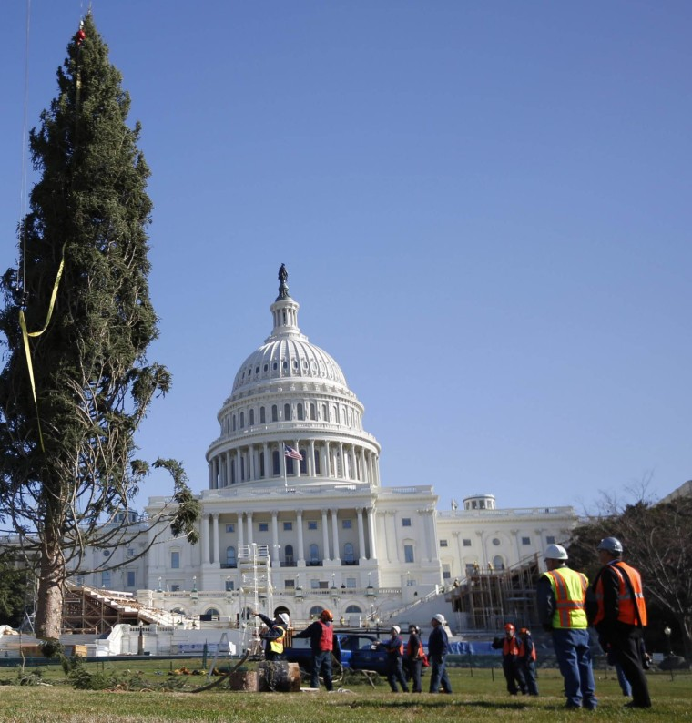 Image:  Capitol Christmas Tree is installed on the west side of the U.S. Capitol in Washington