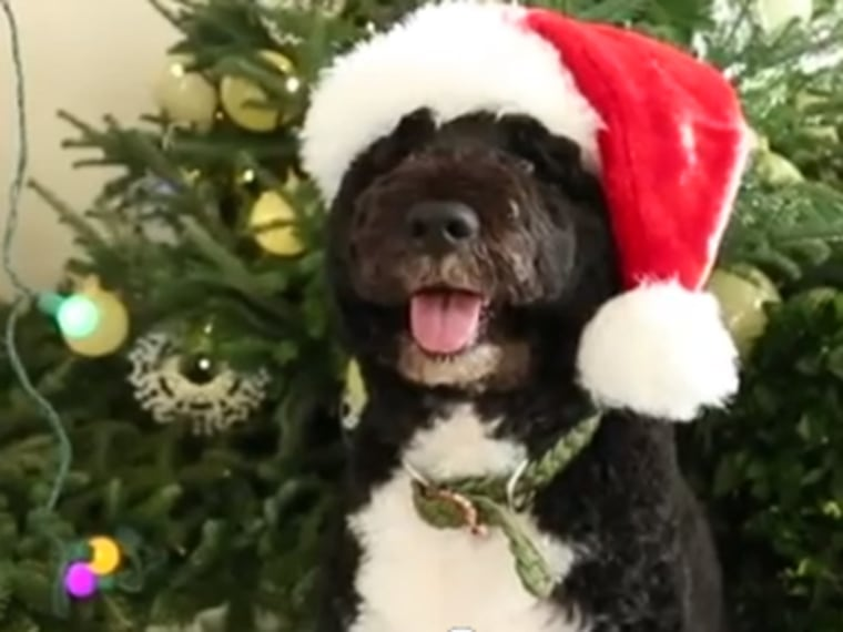 Bo Obama gets into the holiday spirit in a YouTube video released by the White House.