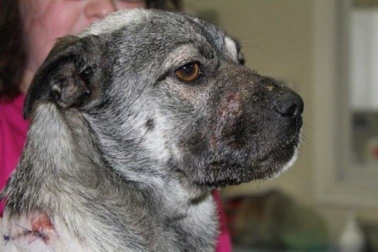 Hope recovers in the care of a Parker County vet after her brutal torture (Parker County).