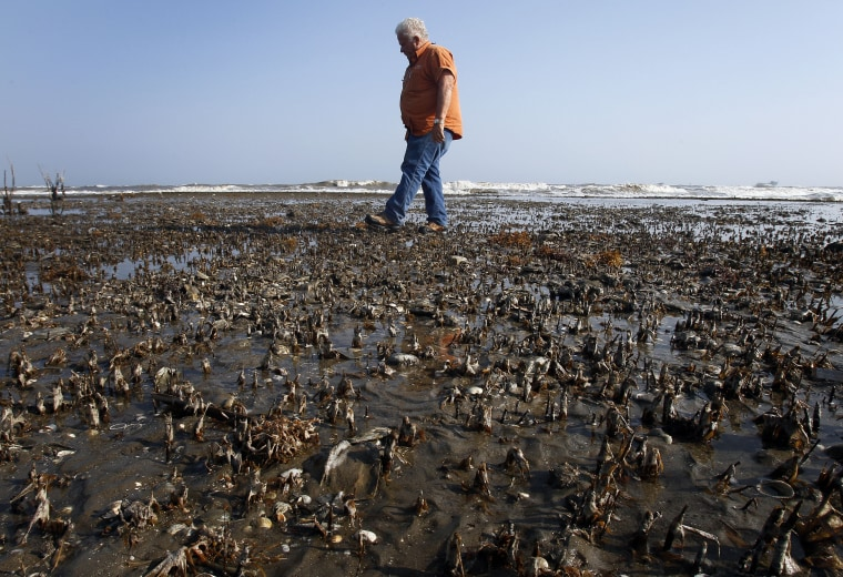 Wisner Properties Field Inspector, Forrest Travirca, walks in an area of dead marsh grass that was impacted by oil from the BP oil spill.