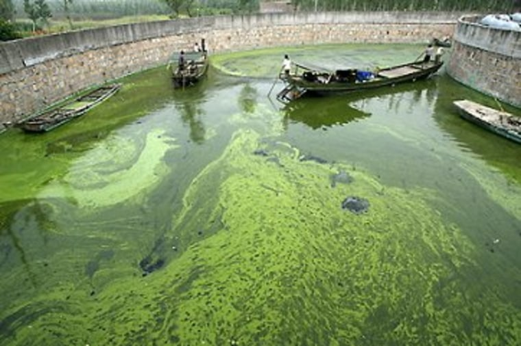 Like it or not, algae is part of the energy debate.