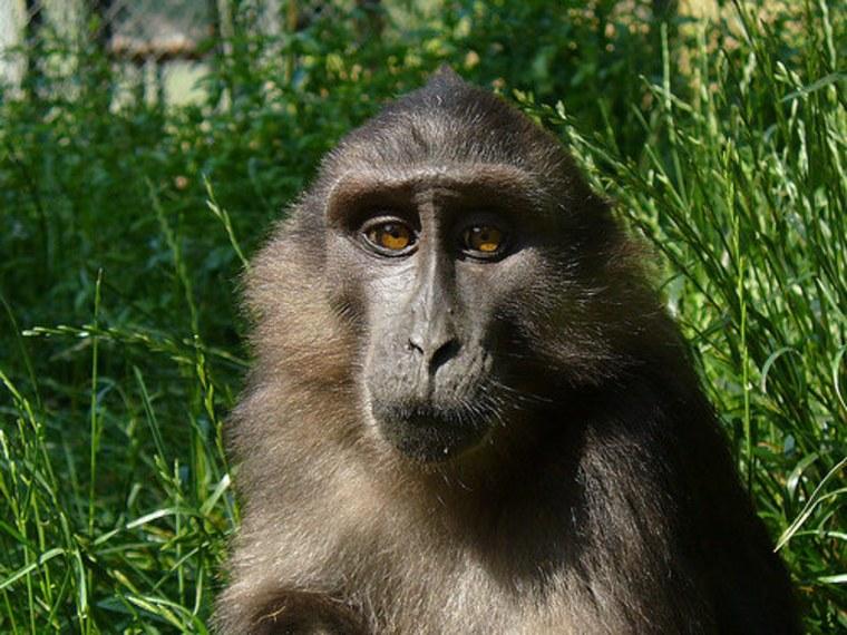 Very ape and very nice