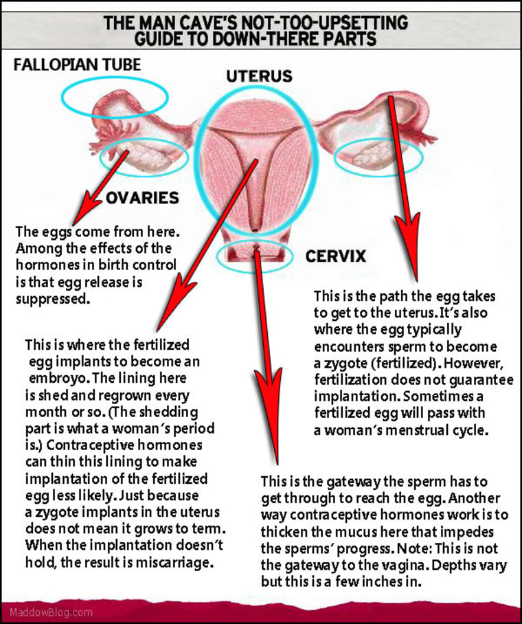 The man cave guide to lady parts - Romney edition