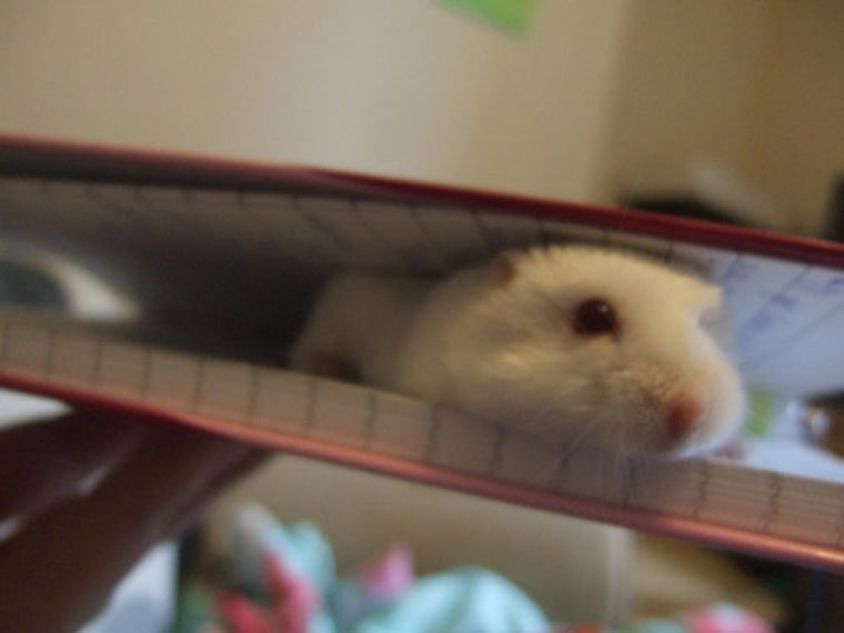 Not my hamster, but an idea for where to look!
