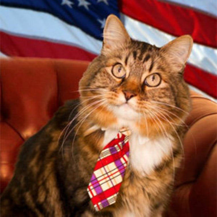 Hank the cat in an official campaign photo.