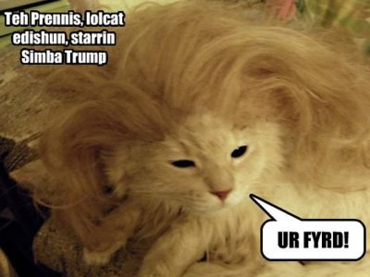Even Trump kitteh would make a better president than The Donald