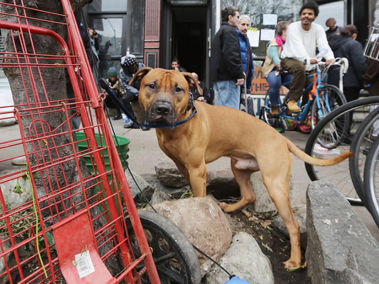 A dog is leashed to a tree as people gather in an area where free food and electric charging is offered in Manhattan's East Village following Superstorm Sandy on November 1, 2012 in New York City.  (Photo by Mario Tama/Getty Images)