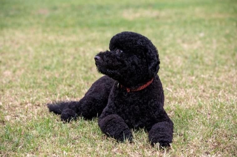 Sunny, the Obamas' new dog