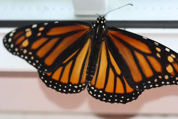 The Butterfly Project: part trois