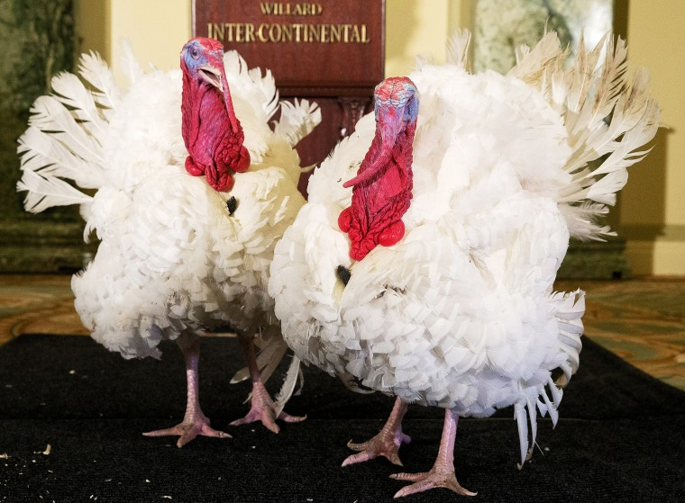 Two turkeys are paraded before members of the media in the Crystal Ballroom of the Willard InterContinental in DC, Nov. 26, 2013.
