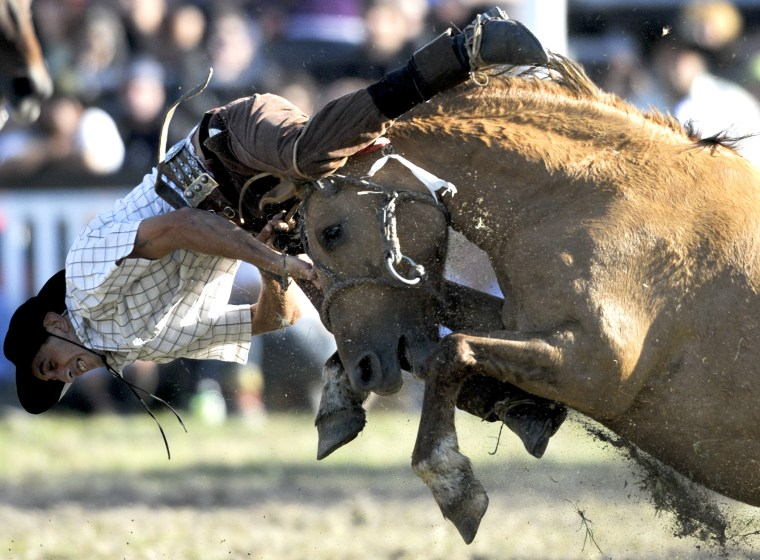 A gaucho or cowboy falls down after riding a horse during a rodeo competition in Montevideo, Uruguay, Friday, April 6, 2012