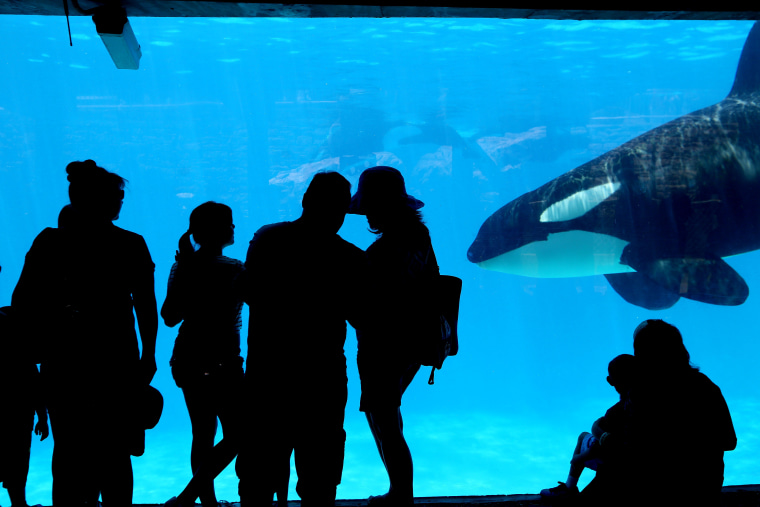 Sea World visitors watch Killer Whales in San Diego.