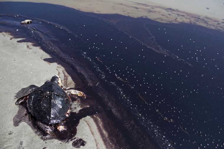 A dead sea turtle lies next to a rolling tide of crude oil, released following the sinking of the BP Deepwater Horizon drilling rig, June 7, 2010.