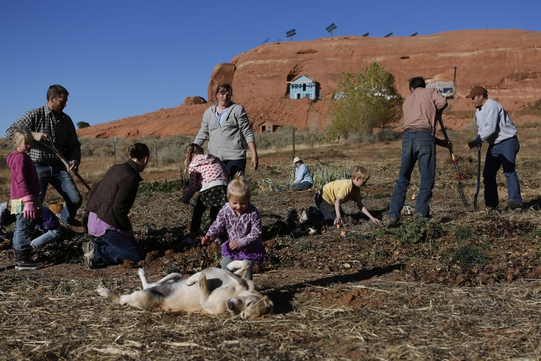 Fundamentalist Mormons harvest the community garden along with their children at the Rockland Ranch community outside Moab, Utah, November 3, 2012.