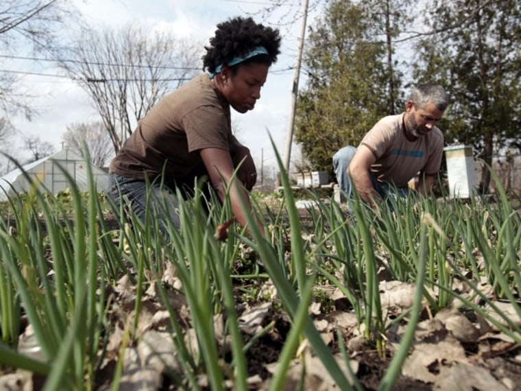 Husband and wife urban farmers Olivia Hubert (L) and Greg Willerer, owners of Brother Nature Produce, pull weeds from a scallion patch on their one-acre urban farm in Detroit, Michigan, March 18, 2012.