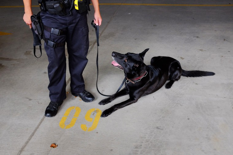A police officer holds his dog on a leash after demonstrating a narcotic search on a vehicle in Colorado Springs, Colo., on Aug. 12, 2013. (Photo by Matthew Staver/Bloomberg/Getty)
