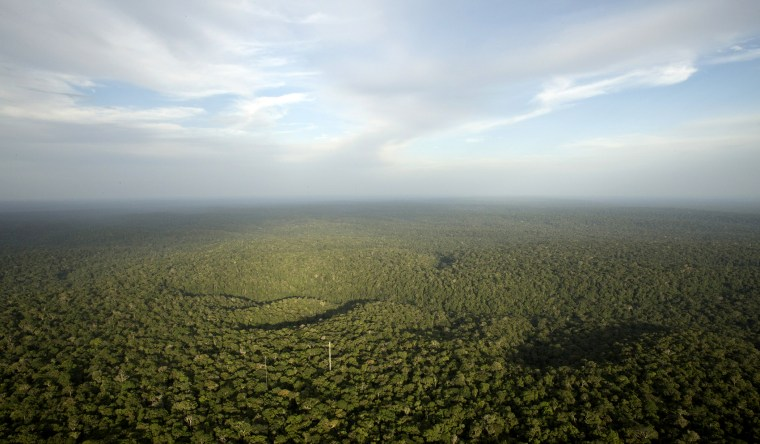 A view is seen from the Amazon Tall Tower Observatory (ATTO) in Sao Sebastiao do Uatuma in the middle of the Amazon forest in Amazonas state, Jan. 10, 2015. (Photo by Bruno Kelly/Reuters)