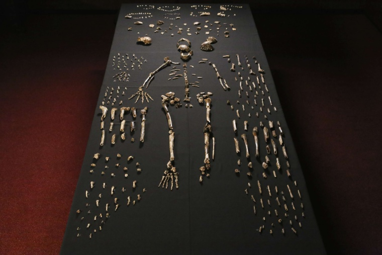 A hand out image made available by the University of the Witwatersrand, shows the skeleton of Homo naledi pictured in the Wits bone vault at the Evolutionary Studies Institute at the University of the Witwatersrand, Johannesburg, on September 13, 2014.