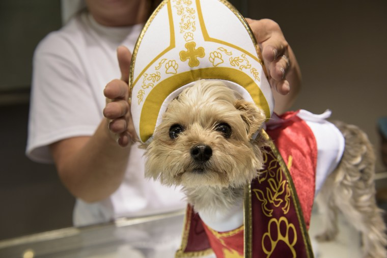 A dog is dressed as the Pope as Pope memorabilia is on sale at Accredited Gem Appraisals on Sept. 25, 2015 in Philadelphia, Penn. (Photo by Brendan Smialowski/AFP/Getty)