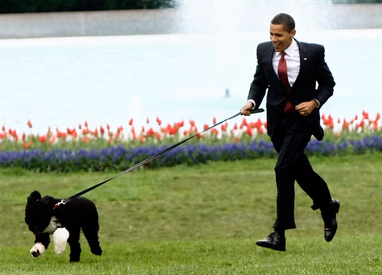 Happy birthday, Bo: Obama family dog turns 7