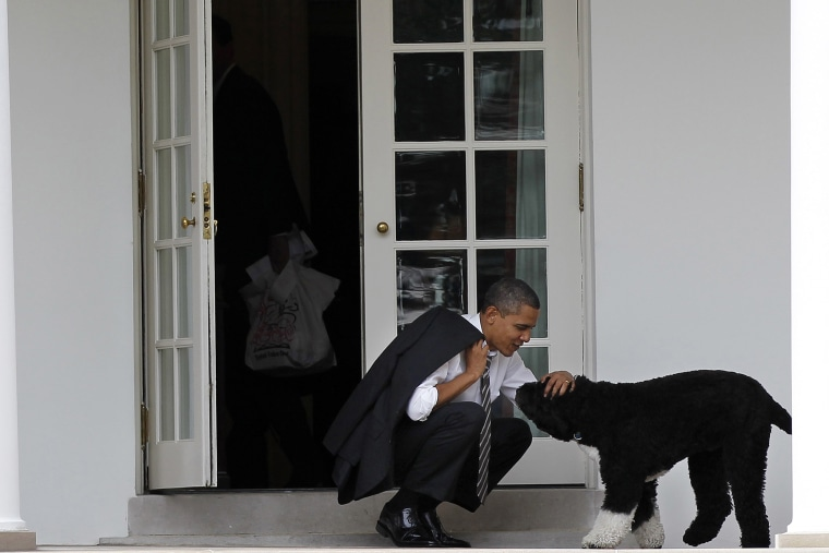 In this March 15, 2012 file photo, President Barack Obama pets the family dog Bo, a Portuguese water dog, outside the Oval Office of the White House in Washington, D.C. (Photo by Pablo Martinez Monsivais/AP)